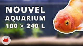 Nouvel aquarium pour poisson rouge