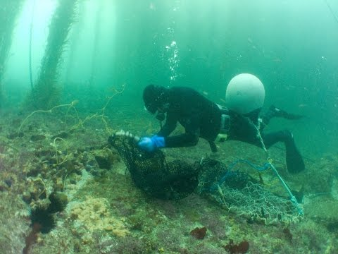 Sea Urchin (Uni) Processing