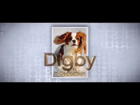 DIGBY Song The Interview 2014