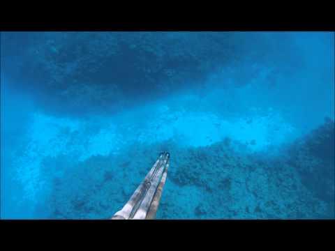 Holmes Reef Dogtooth Tuna Driveby