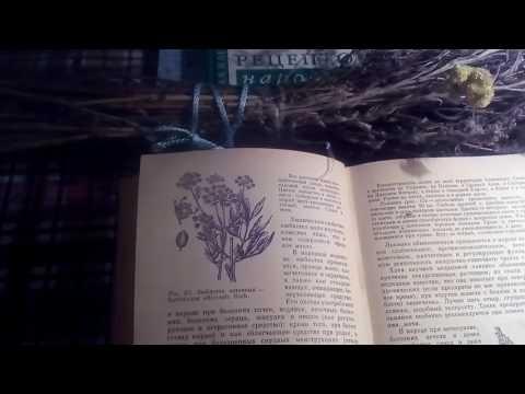 Про Чабрец (Тимьян ползучий). Выращивание, сбор, рецепт