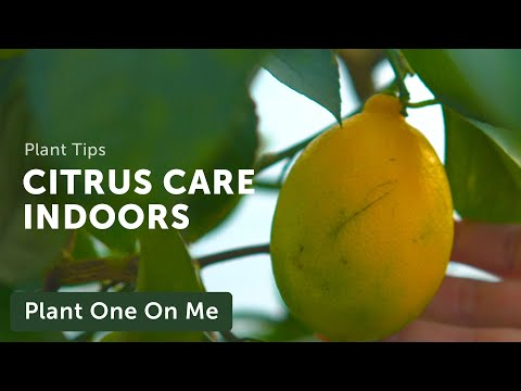 Citrus Care & Propagation With Logee's — Ep 156