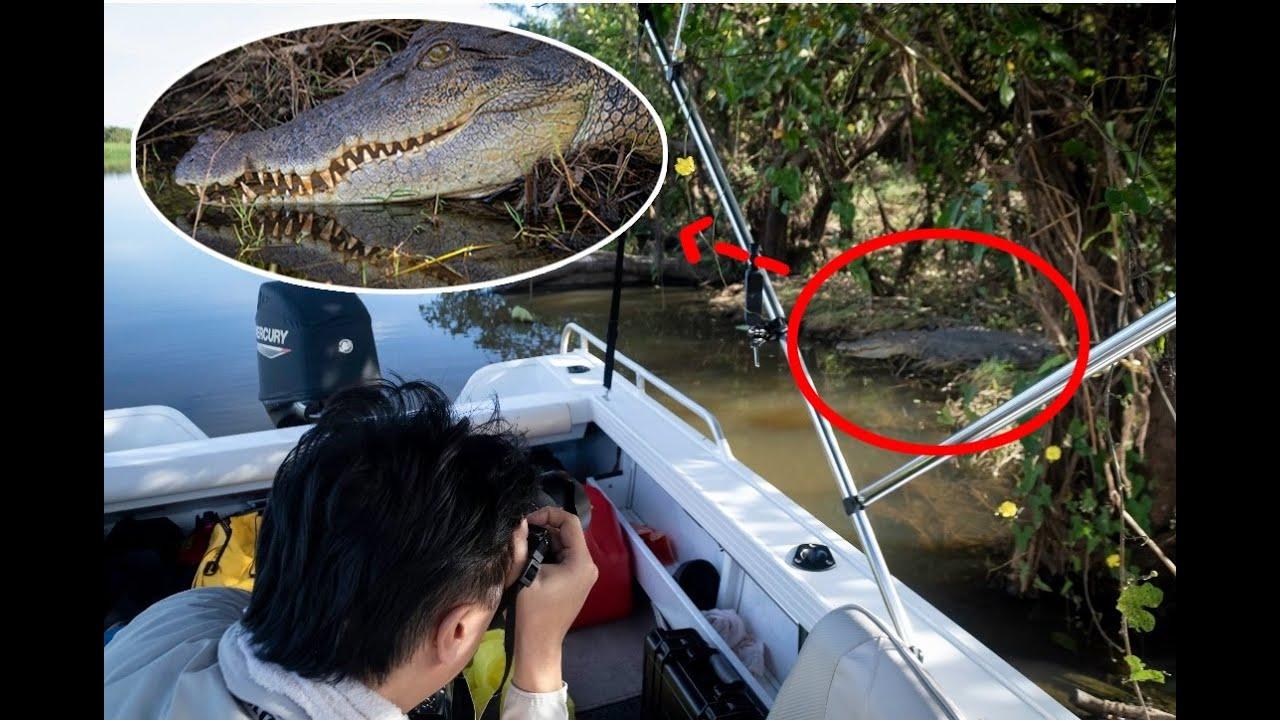 여기선 이게 일상이라는데... 실제로 촬영한겁니다. 함부로 수영하면 큰일나겠네요... 매년 레전드를 찍고있는 호주의 야생클라스.
