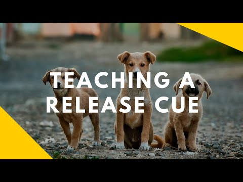 Teaching Your Dog A Release Cue