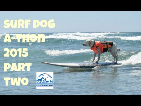 Surf Dog Surf-A-Thon 2015 - Part Two