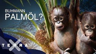 Palmöl – besser als sein Ruf?   Dirk Steffens