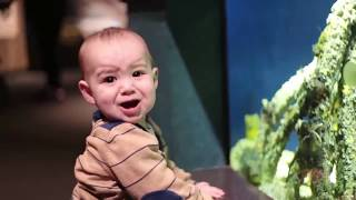 Funniest Baby Fails Video
