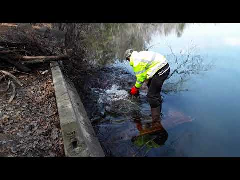 People really love this video of a dude unclogging a drain