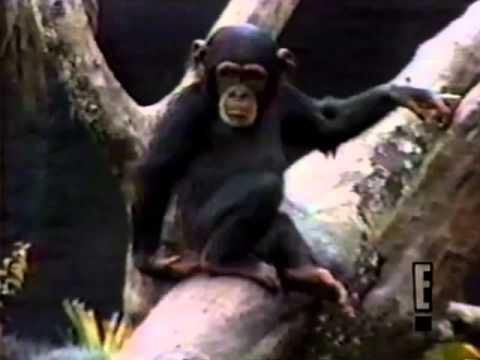 Monkey sniffs butt