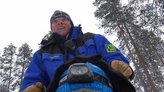 видео Катание на собачьих упряжках в Карелии