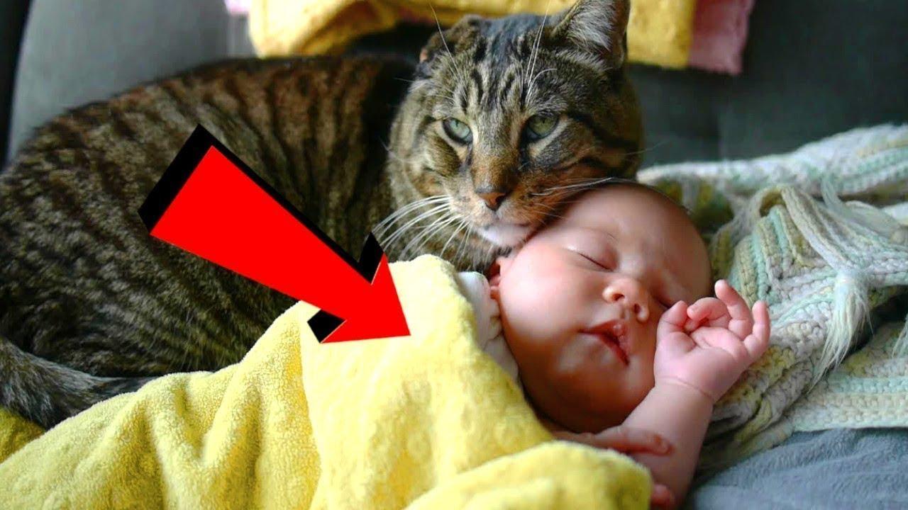 انقذ هذا القط طفل مرمي في الشارع .. لن تصدق كيف انقذه !!