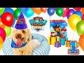 Mascota DCTC en Español Fiesta de Cumpleaños - Nube Fiesta de Paw Patrol Learning Colors