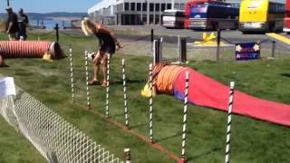 Academy Of Vancouver Island Dogs Agility Demonstration