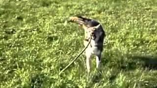 Лаки. Найдена собака. Ищет новых хозяев.