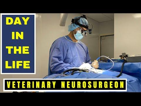 VETERINARIAN NEUROSURGEON -