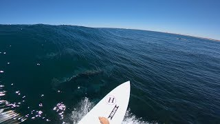 GoPro Awards: Surfing with Dolphins