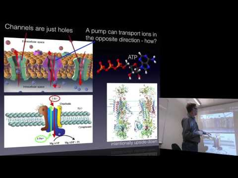 Biophysical Chemistry 2016, lecture 1