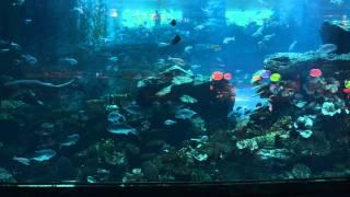 Дубай мол аквариум(Видео аквариума в торговом центре Dubai Mol. Самый большой аквариум в мире., 2013-09-27T15:42:50.000Z)