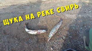 Рыбалка на реке Свирь Щука и окунь есть