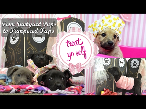 Galentine's Day with Puppies
