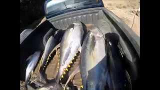 Polynesia fishing and spearfishing