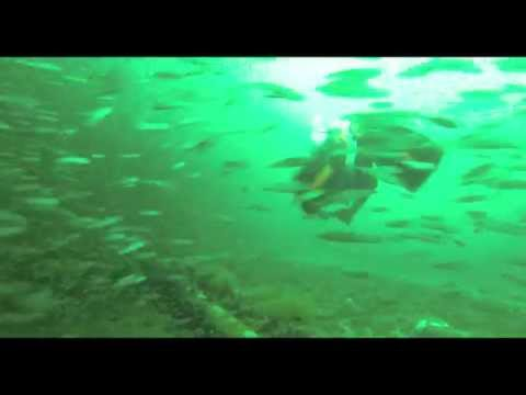 Monster Goliath Grouper Eats Amberjack Whole from YouTube · High Definition · Duration:  3 minutes 8 seconds  · 798 views · uploaded on 13.04.2015 · uploaded by Justin Mahon