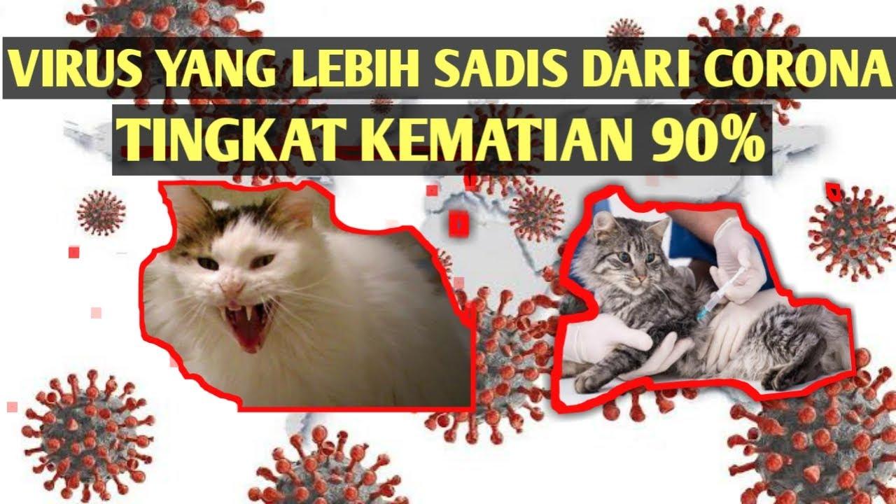 Gambar Kucing Viral Tiktok godean.web.id