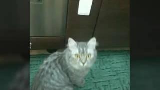Про котов или какие коты?