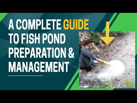 Pond Preparation A Complete Guide to Fish Pond Preparation and Management (Tagalog)