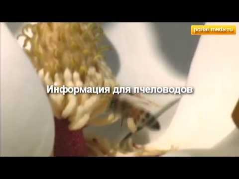 Мэддисон играет в Ведьмак 3, day 8 1/2 - YouTube