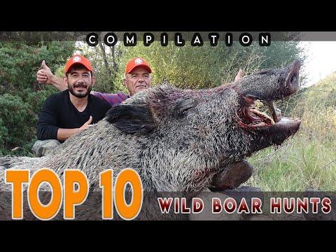 TOP 10 WILD BOAR HUNTS AMAZING KILL SHOTS COMPILATION – EN İYİ 10 DOMUZ AVI – CHASSE AU SANGLIER