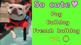 【so Cute】☆pug & Bulldog & French Bulldog☆vol.1  ♪gif Animations♪