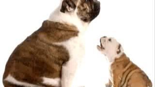Online Puppy Training Videos