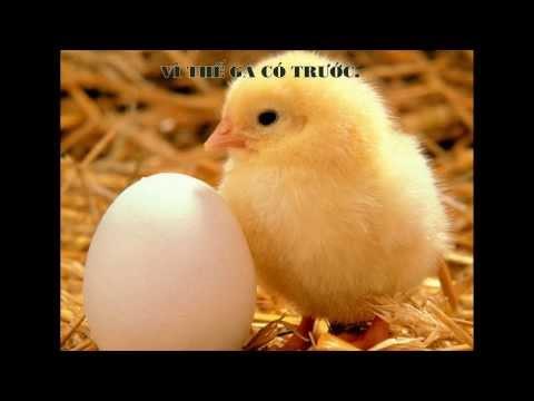 [Thư giãn cuối tuần] Con gà và Quả trứng, cái nào có trước?