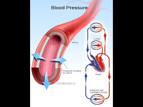 Cardiovascular System: Blood Pressure Regulation