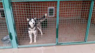 Приют для животных Харьков Собаки