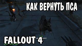 Как вернуть собаку Fallout 4