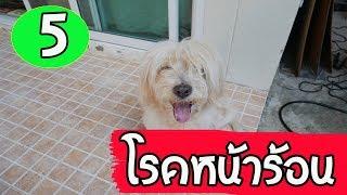 แชร์เก็บไว้เลย 5โรคหน้าร้อนที่เจอบ่อยในสุนัข ป้องกันสุนัขจากโรคในหน้าร้อน l love dog