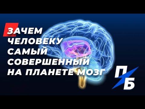 Зачем человеку самый совершенный на планете мозг. Сашины мЮсли #36