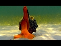 Giant Horse Conch & Burglar Hermit Crabs | Blue Planet | BBC Earth