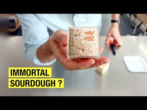 3 Lazy Ways To Put Your Sourdough Starter On Hold  !  Sourdough Bread Odyssey