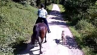 Www.weimaraner-von-bayern.de, Training Pferdebegleithund