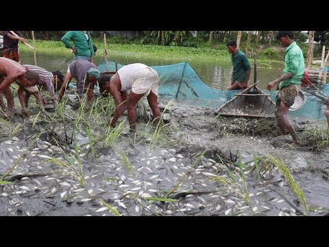 Trapping Huge Country Fish | Unbelievable Fishing! Village People Best Fish Hunting | Fishing System