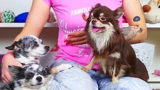 СОБАКА МИША ЗАБОЛЕЛА? ВРЕДНЫЕ ДЕТКИ! Лечение собаки, уход за щенком, первые слова