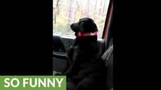 Dog dozes off while deer hunting