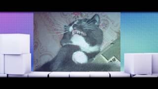 Кот сканирует объект