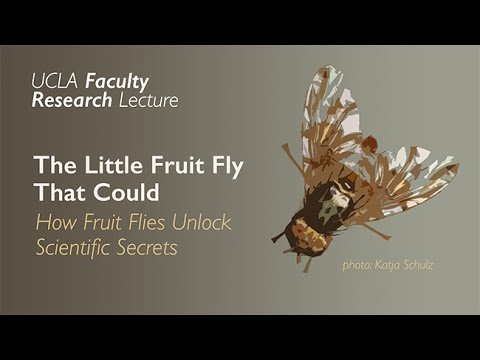Oncogene Metabolism of Development Cancer and the Little Fruit Fly That Could