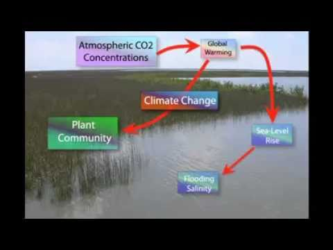 Global warming affecting wetlands, what else?