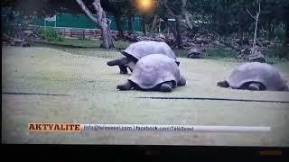 AG#Seychelles#News#TeleSesel#27.11.19