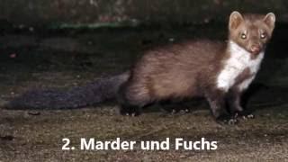 Gefahren Fur Laufenten Losung